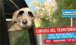 Bando Curiosi del Territorio 2015